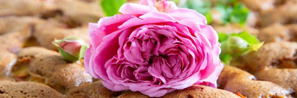 rosa Rosenblüte auf Kuchen