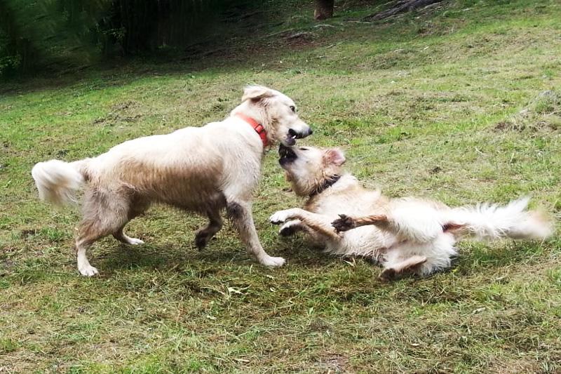 Sultan tobt mit einem Hundefreund