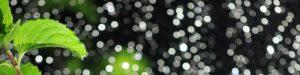 Minzblatt vor Lichtperlen-Hintergrund