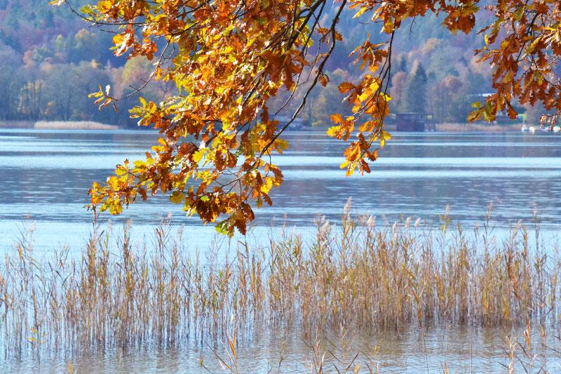 Oben bunt Blätter, unten See mit Schilf