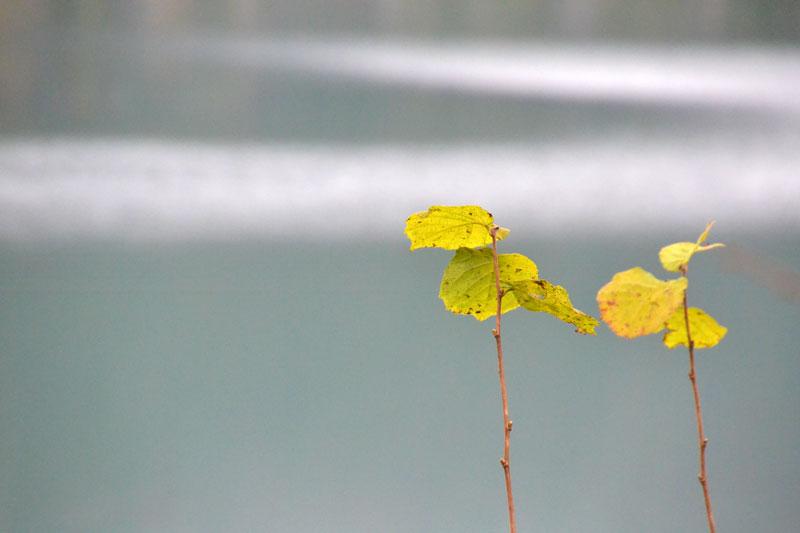 letzte Herbstblätter am Zweigende vor ruhigem Seewasser
