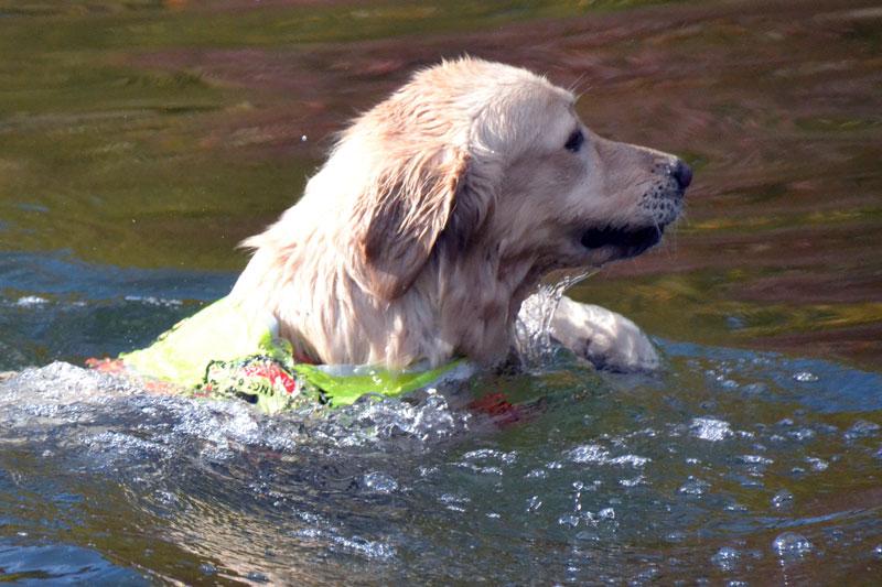 Sultan schwimmt