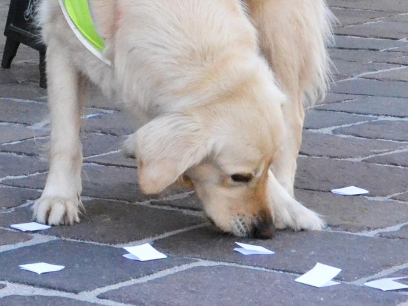 Sultan sucht sich einen Loszettel vom Boden aus